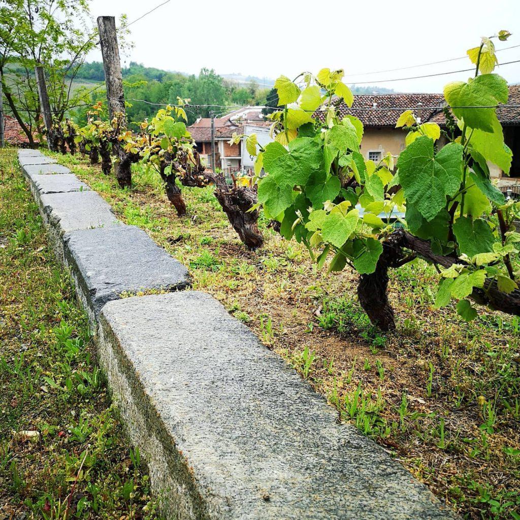 CASCINA FONTANA - PERNO  - VISITA IN CANTINA
